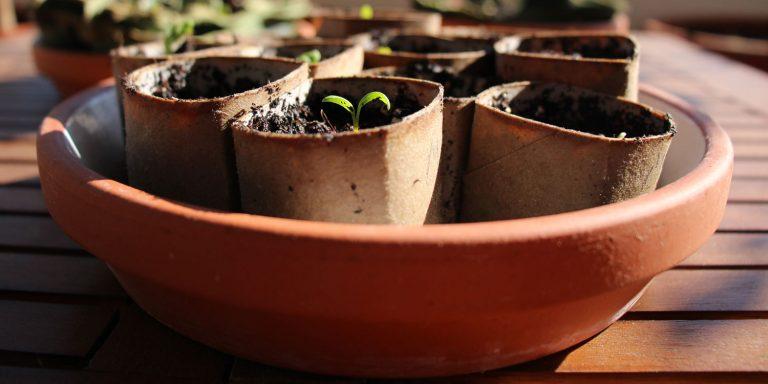 DiY Anzuchttöpfe basteln - kostenlos & kompostierbar 1