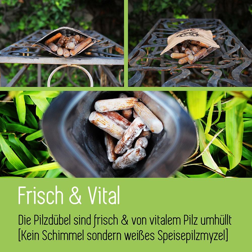 Pilzzucht in 3 Schritten - Im Haus & Garten Pilze züchten 2
