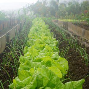 Ratgeber Pilzzucht & Gemüsegarten 11