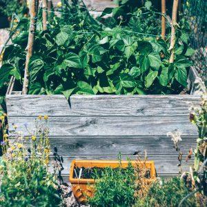 Ratgeber Pilzzucht & Gemüsegarten 12