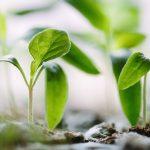 Ratgeber Pilzzucht & Gemüsegarten 1