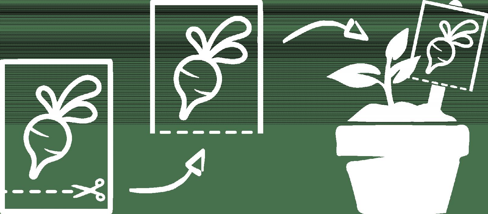 MycoGreens Saatgut Set - 8 alte Sorten Gemüse samenfest 10