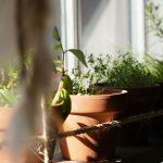 Ratgeber Pilzzucht & Gemüsegarten 2
