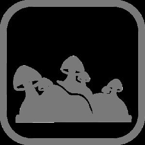 How to | Pilzzucht Anleitung & Videos - 5 Methoden - PilzWald 7
