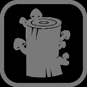 How to | Pilzzucht Anleitung & Videos - 5 Methoden - PilzWald 6