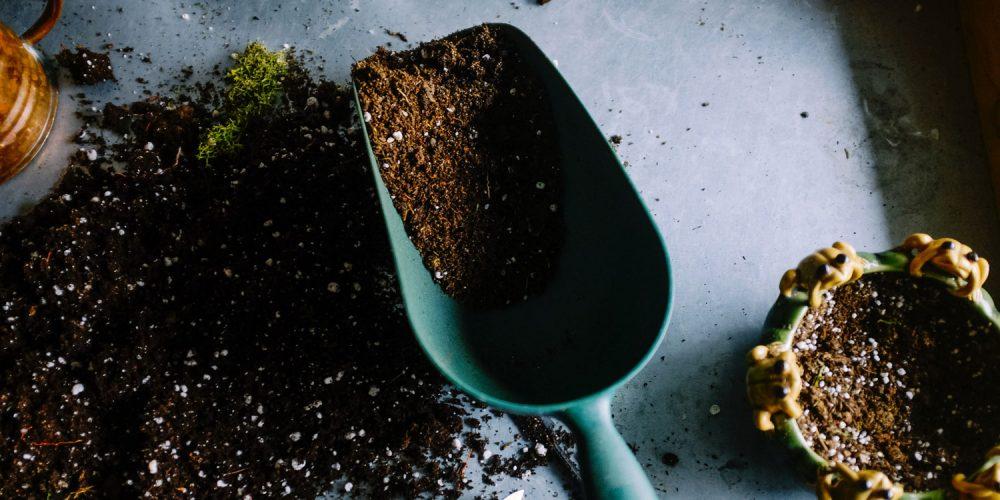 Anzuchterde-torfrei-Kokoserde-Saatgut-keimen-MycoGreens-PilzWald
