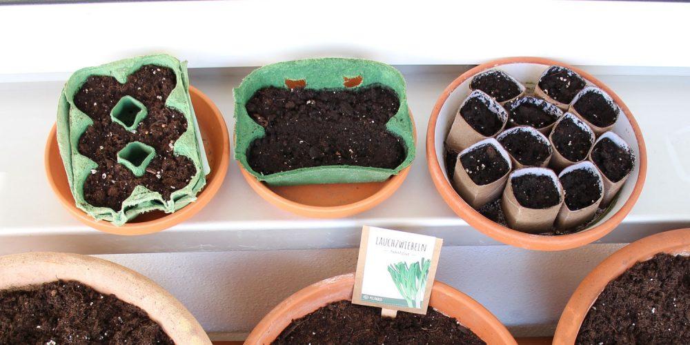 Anzuchttöpfe basteln aus Eierkartons und Klopapierrollen kostenlos und kompostierbar PilzWald MycoGreens