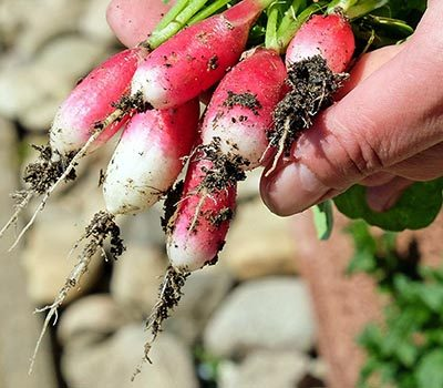 MycoGreens-Samen-Gemuese-einfach-selbst-zuechten-anbauen-400.jpg