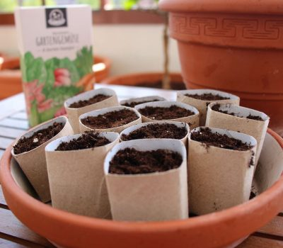Anzuchttöpfe basteln biologisch abbaubar und kompostierbar PilzWald MycoGreens